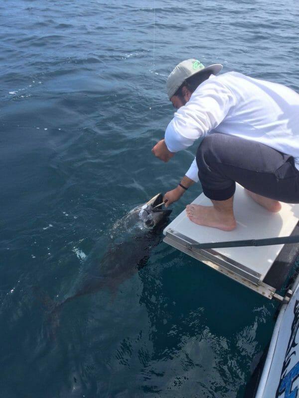 Battuta di Pesca al Tonno Rosso in Adriatico Rimini
